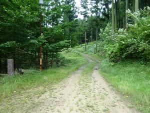 キャンプ場への道