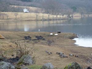 湖畔のアヒルとトレーラー