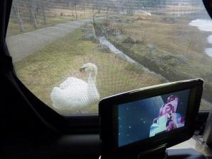 KONGに接近する白鳥