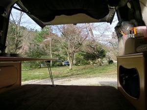 バックドアから見える桜_20160409