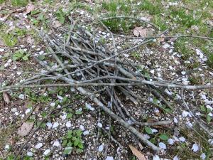枯れ枝を集める_20160409
